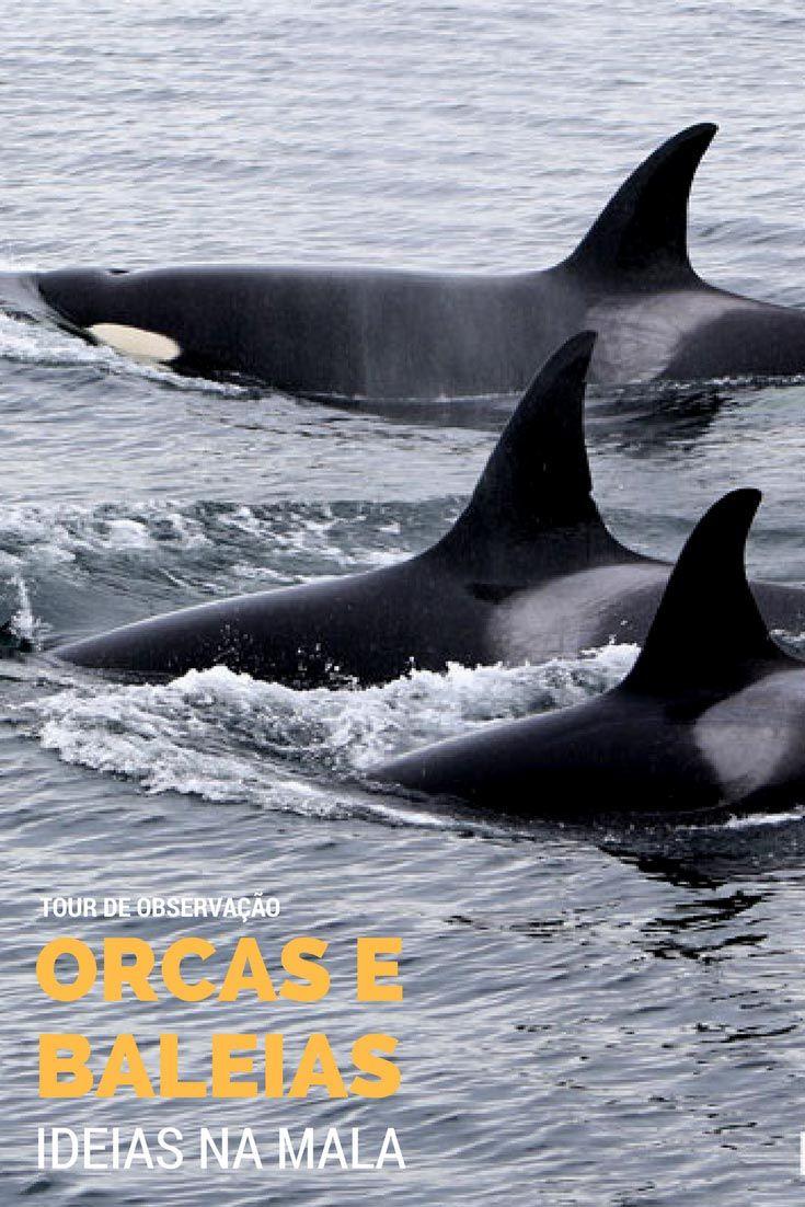 Orcas em Victoria B.C   Tour para observação de Orcas e Baleias em Victoria, British Columbia - Canadá. Veja todos os detalhes do passeio, com direito a fotos lindas neste post.