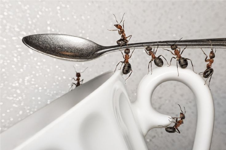 How to Keep Ants Out of Your Home - Naturally and Humanely