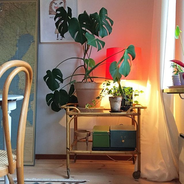 WEBSTA @ yourdailydeco - Whats your latest thrift? I found this vintage serving trolley today at my hidden gem, a fleamarket close to work which I try to visit every tuseday at opening 😊 🎈#serveringsvagn #loppisfynd #fleamarketfind #interior #yourdailydeco #urbanjungle #urbanjunglebloggers