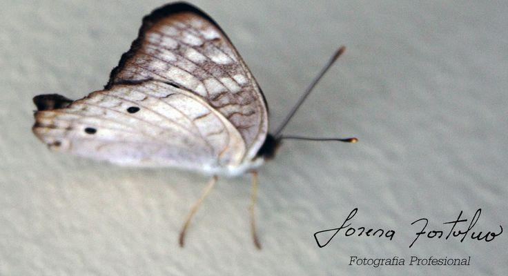 Mariposa Bernalina.(en algún lugar de Colombia, con muchos miles de ISO)