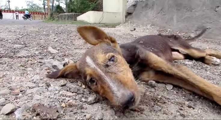 Lifeless Street Puppy Is Unrecognizable After Rescue