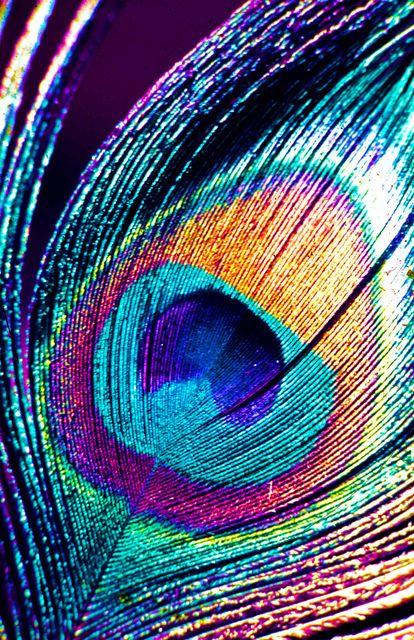 one of my favorite things....  peacock feathaaas.