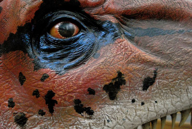 close up detailed pictures of dinosaurs - Google Search