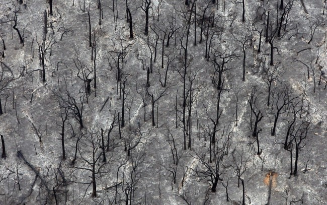 """Burnt out trees outside Kinglake that were destroyed by fire are viewed from this aerial shot on February 8, 2009. Over 170 people were killed and entire towns razed in one of the worst wildfire disasters in Australian history, sending thousands fleeing in scenes Prime Minister Kevin Rudd compared to """"hell"""". (MARK SMITH/AFP/Getty Images)."""