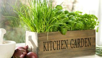 5 Dicas para ter uma horta na cozinha