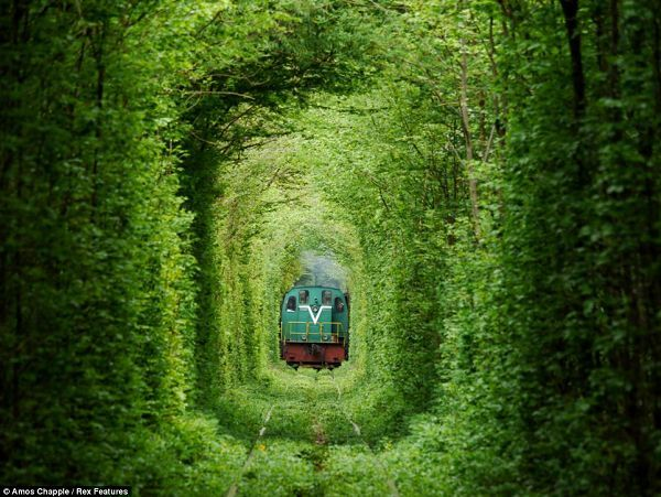 画像 : まるでジブリ!世界一ロマンチックなトンネル『恋のトンネル』が美しい - NAVER まとめ