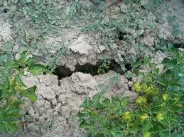 Cosa si intende per #terreno compattato? Come possiamo migliorare il terreno del nosro #orto? Scopri di più!