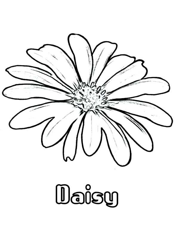 Daisy Coloring Pages Best Coloring Pages For Kids Flower Coloring Pages Online Coloring Pages Daisy Drawing