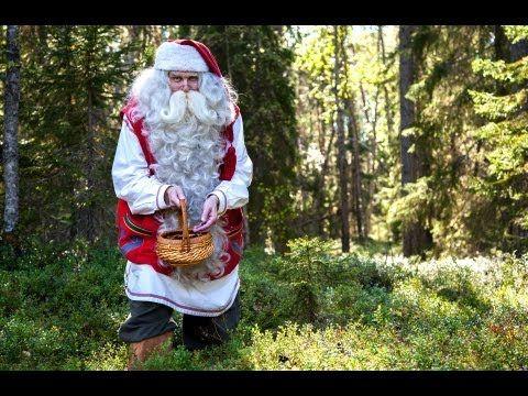 Père Noël en cueillette des myrtilles en Laponie en Finlande