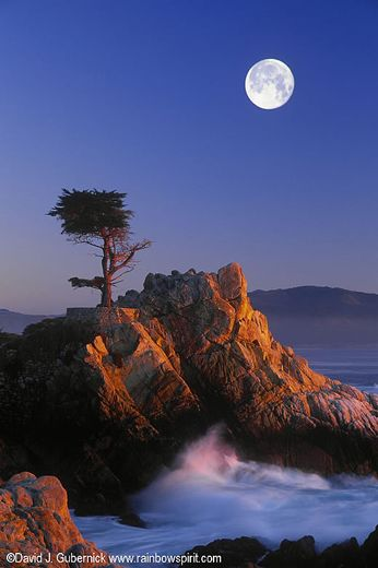 The Lone Cypress in Pebble beach, CA.  Photography by David J. Gubernick.