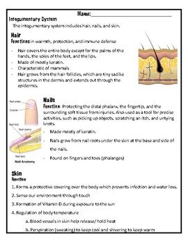 These notes cover the structure and function of the integumentary system of hair, skin and nails. This human body system bundle includes all of the activities that you can find in my store. 7th Grade Life Science Human Body Systems Review Digestive System Diagram Human Body Level Questions Life Science Digestive and Circulatory Systems I have ... who has?...