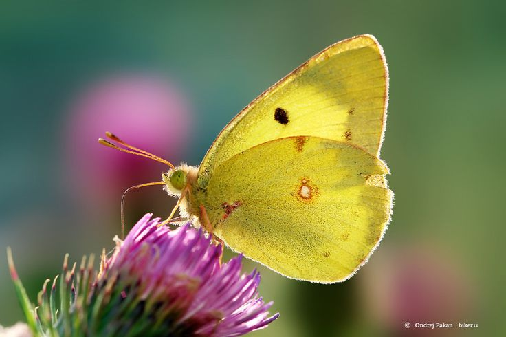 Photo Yellow by Ondrej Pakan on 500px