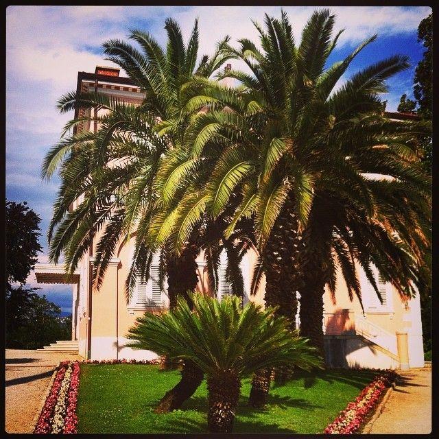 Palmer er alltid vakkert. #palmer#ferie#holiday#kroatia#storslagent#vakkert#grand