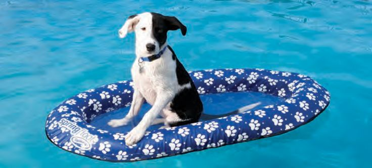 Spring Float Paddle Paws - Small - PoolSupplies.com