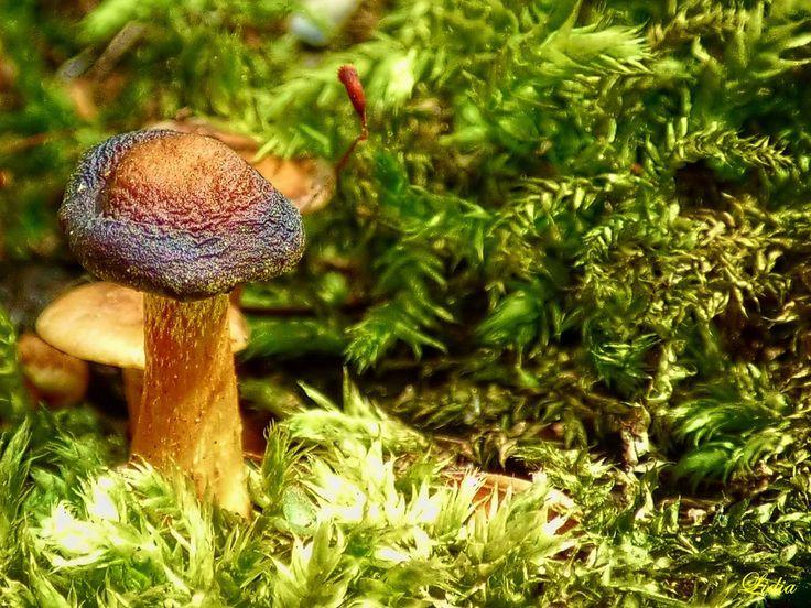 ..w lesie