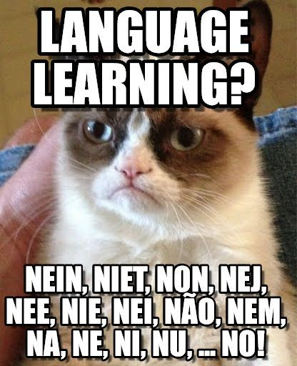 grumpy cat   grumpy cat says no in over 36 languages  language learning   nein  niet  non  nej