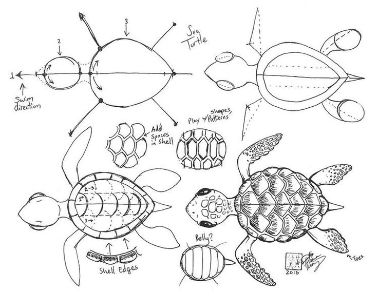 Turtle Shell Pattern Drawing