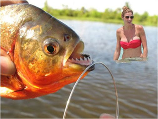 Erin Andrews - piranhas