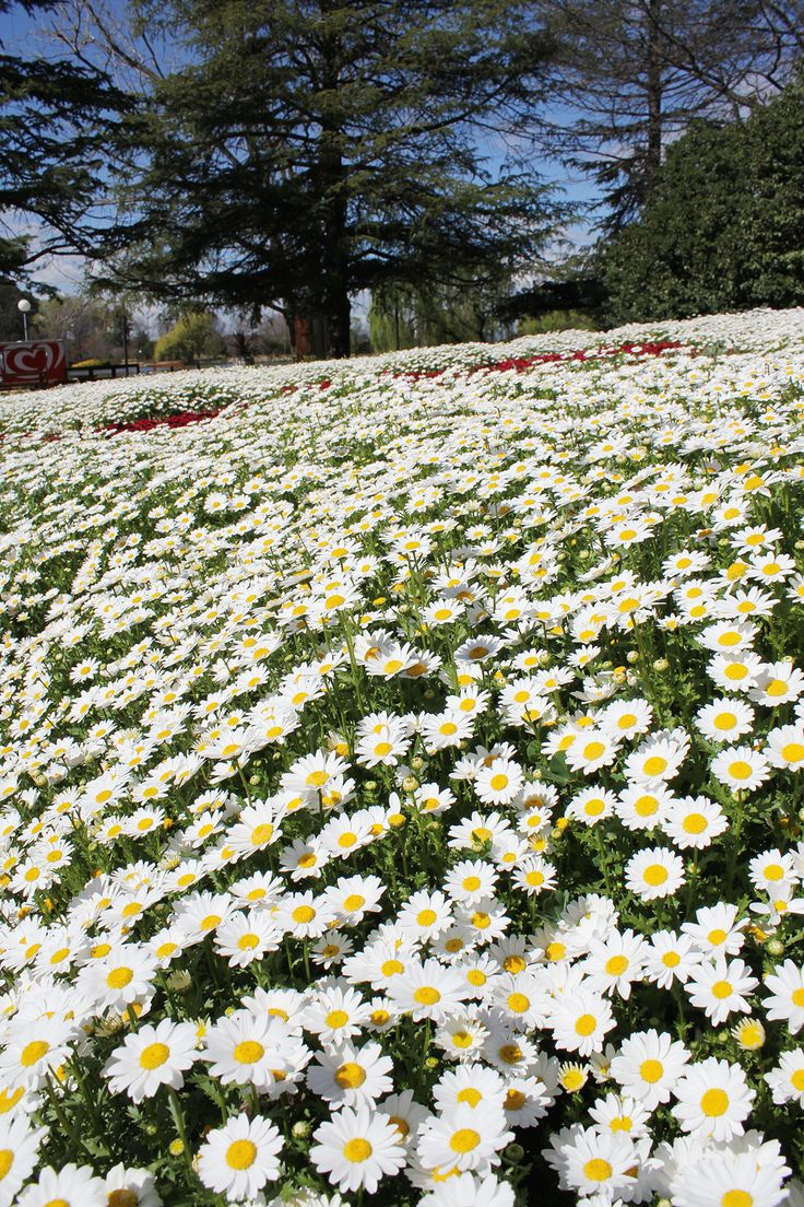 Canberra's Commonwealth Park is set to come alive with the sights, tastes and sounds of spring as Floriade returns this September.
