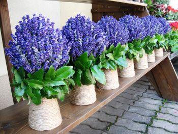 BUCHETE DE MIREASĂ – Atelierul de flori Timisoara