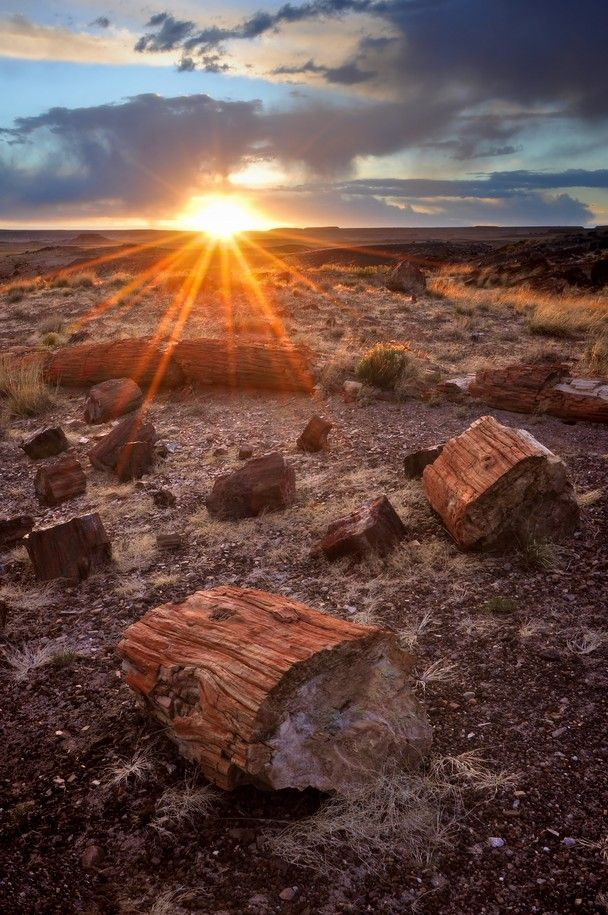 Petrified Forest National Park - Arizona.  93,532.57 acres.  This portion of the Chinle Formation has a great concentration of 225-million-year-old petrified wood.  The  surrounding region, the Painted Desert, has eroded red-hue volcanic rock called bentonite.  There are also dinosaur fossils and over 350 Native American sites.