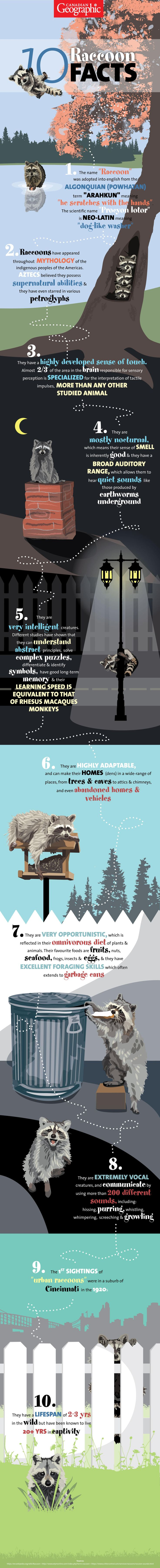10 fascinating facts about raccoons