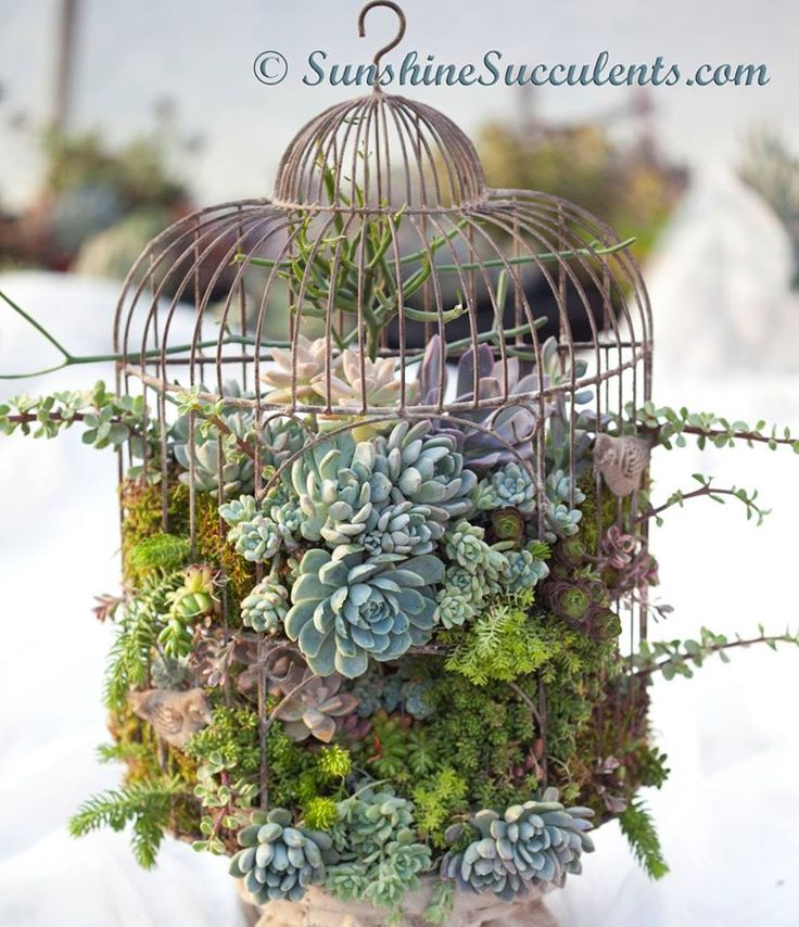 Bird Cage Succulent Planter