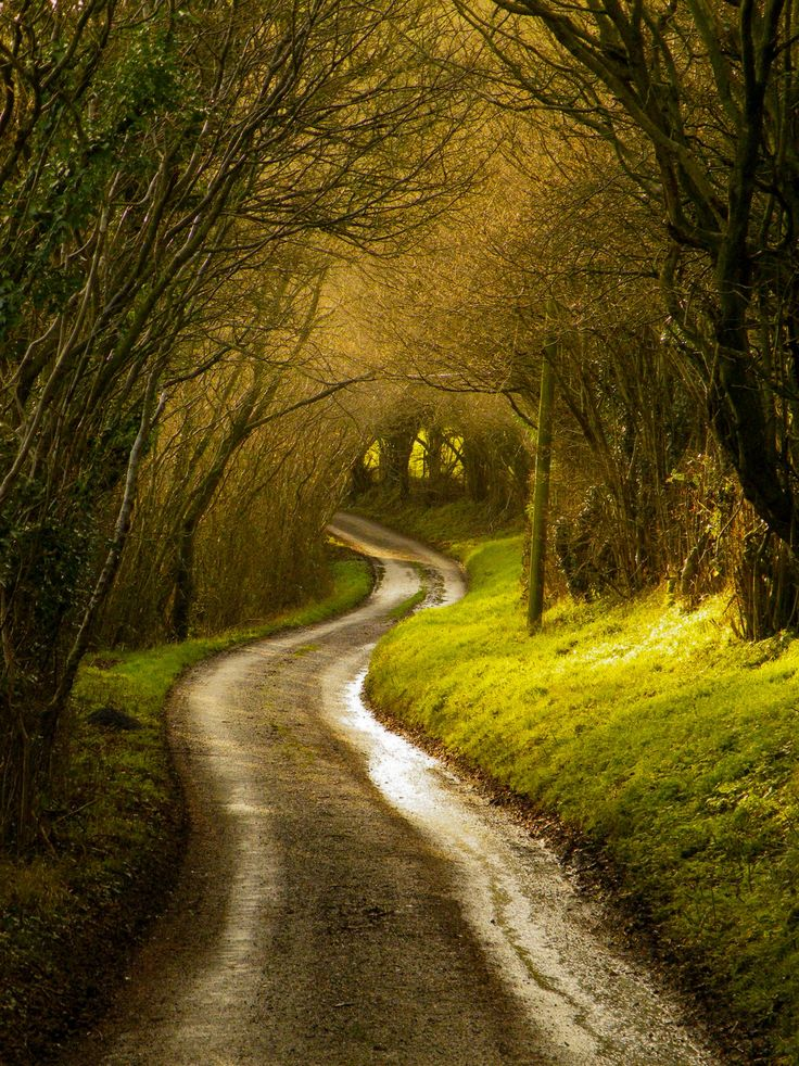 Down ancient tracks (Wales, UK) by ros baylis