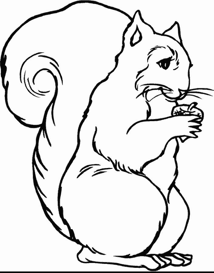 red fox coloring page 4 705x897 animal coloring pagescoloring book