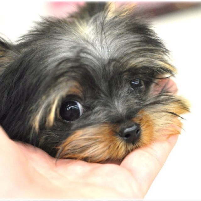 """The """"puppy dog"""" look..total cuteness!!"""