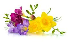 Love how these colours work - would look good for my pansy and freesias?