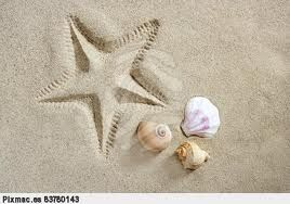 conchas y estrellas de mar - Buscar con Google: Sea Shells, Sea Creatures, Estrella De Mars, Sea Sands, Star, Conchas De, Sell Sea, Playa Estrellas, Encantan En