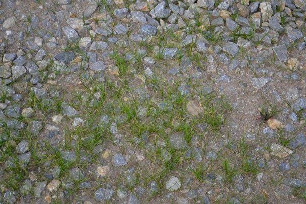 Výsledek obrázku pro štěrkový trávník