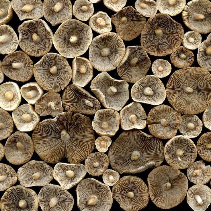 Horticultural Art | Mushrooms