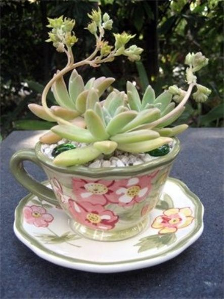 ciao! newport beach: creative succulents: Can Petite, Teacups Gardens, Succulents In Teacups, Teas Cups, Gifts Ideas, Creative Succulents, Newport Beaches, Teacups Succulents, Teacups Planters