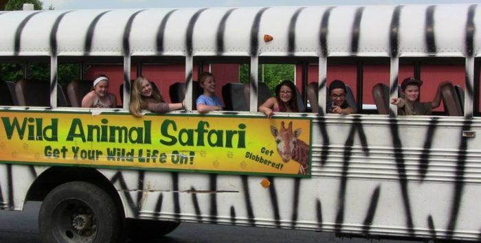 Climb aboard the safari bus for a ride around the park. The safari bus is included in the price of admission.