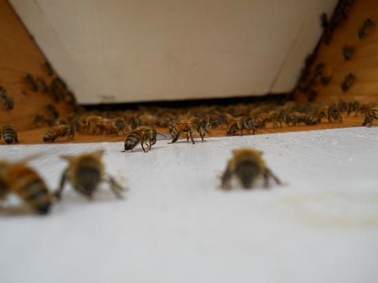 How I define Sustainable Beekeeping