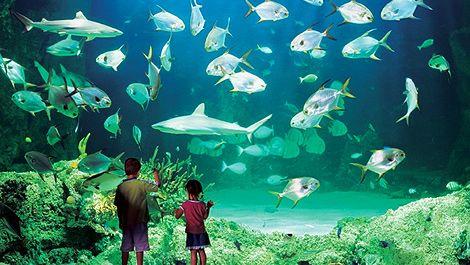 Sydney Aquarium  With animals including huge sharks and sting rays, platypus, seals etc.
