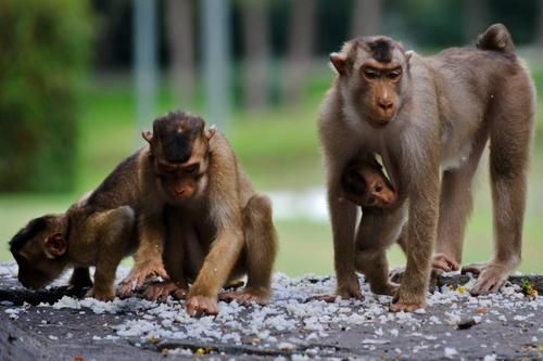 New Drug 'Astonishingly Effective' Shield Against AIDS Virus in Monkeys - Scientists said Wednesday a new drug tested on monkeys provided an astonishingly effective shield against an animal version of the AIDS virus, a major gain in the quest for an HIV vaccine.