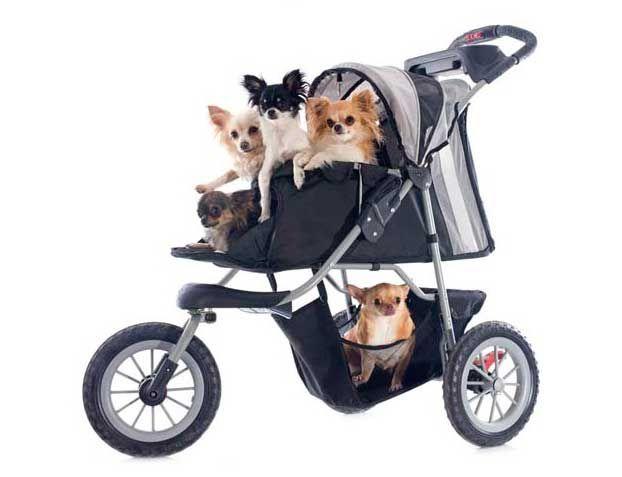 Triciclos y perros   Pasear perros, Cochecito para perro
