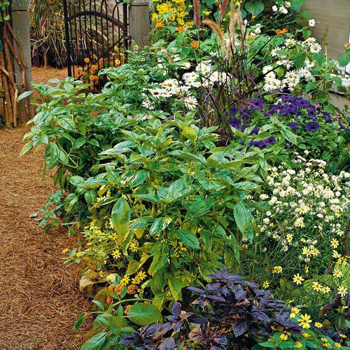 bhg how to grow herbs