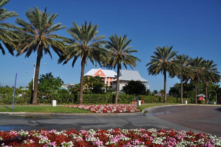 Typical tree lined street in Grand Bahama  #grandbahama #palmtrees  #Caribbean #islandlife