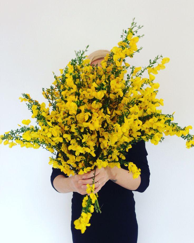 divoké květy