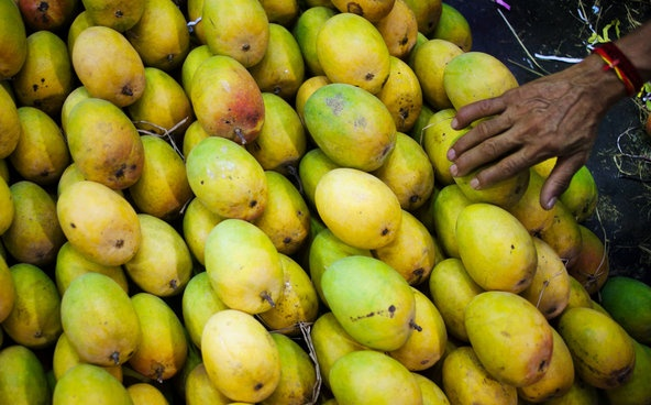 The Mango Bites Back - Despite decades of immunological research and a recent surge of interest in the bacterial garden of the human gut, diarrhea remains the most unpredictable travel-related illness. There is a grim acceptance among Western expatriates and visitors here that they will be felled by it — often on multiple occasions.: Mango Bites, Travel Bookmarks, Unpredict Travel Rel, Travel Rel Illness, Survival Traveler, Bacteri Gardens, Diarrhea Remain, India Vacations, Traveler Diarrhea
