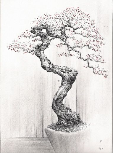 bonsai tree sketch - Buscar con Google