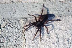 5 luonnollista vinkkiä: Näin pääset pysyvästi eroon hämähäkeistä kotonasi