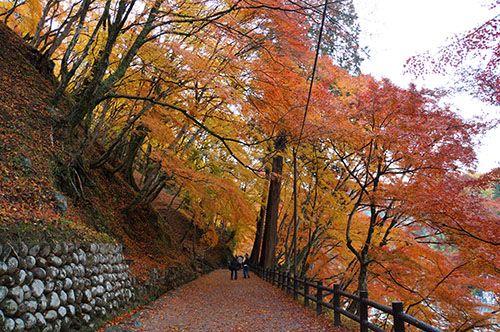 東海随一といわれる香嵐渓の紅葉を見に行ったよ : 旅行記「俺たち旅に出る」
