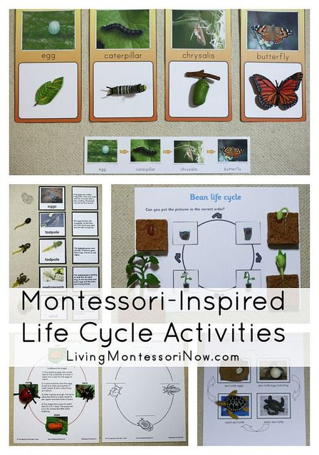Montessori-inspired life cycle activities with links to free life cycle printables