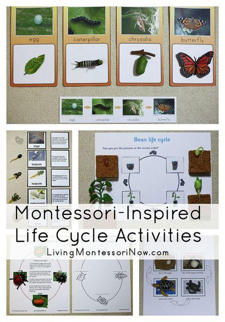 Montessori Monday – Montessori-Inspired Life Cycle Activities