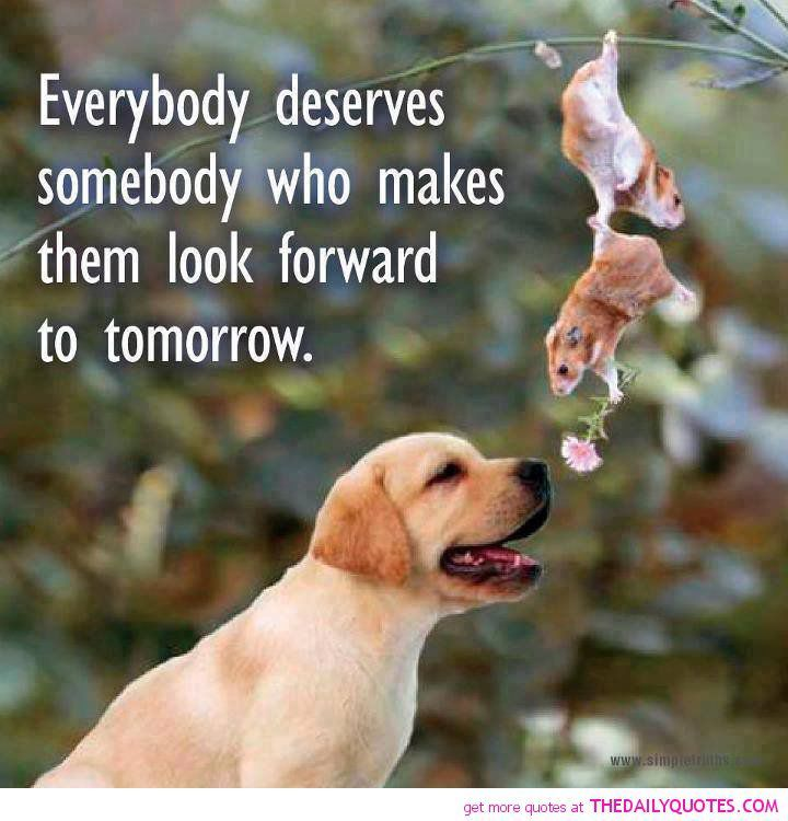 Positive Quotes With Animals Cute Quotesgram Animal Quotes Cute Animal Quotes Animal Love Quotes